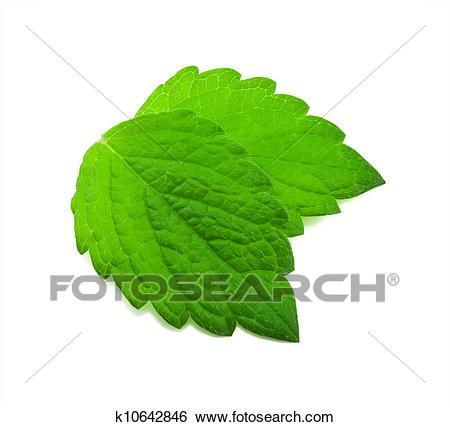 Mint leaves clipart 5 » Clipart Portal.