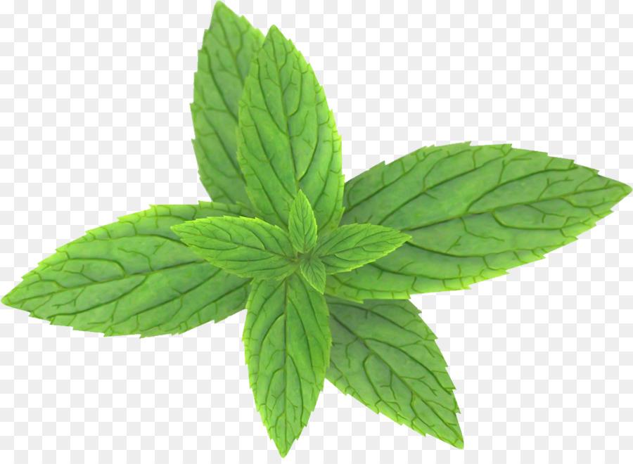 Basil Leaf clipart.