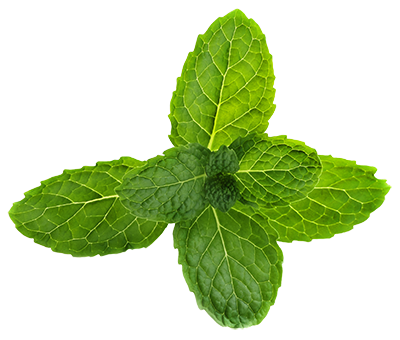 Pepermint PNG images free download, mint PNG.