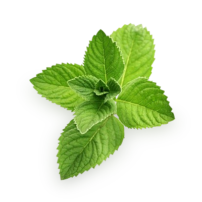 Download Mint PNG Pic 294.