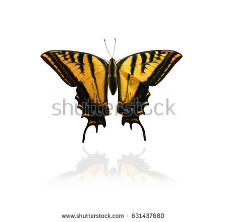 Swallowtail Stock Images, Royalty.