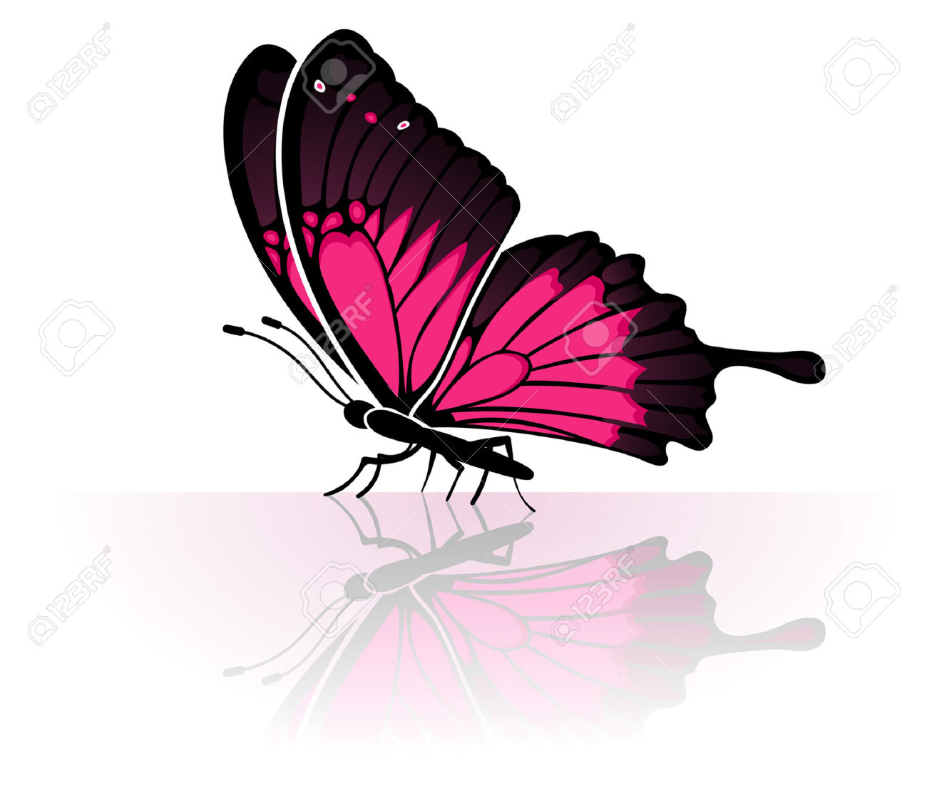 Butterfly With A Mirror Reflection, Element For Design, Vector.