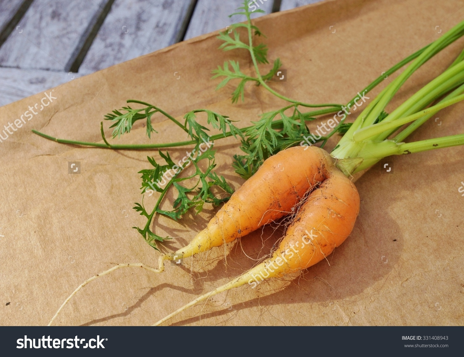 Siamese Twin Misshapen Carrot Stock Photo 331408943 : Shutterstock.