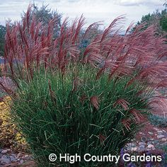Grasses, Canadian prairies and Fire on Pinterest.