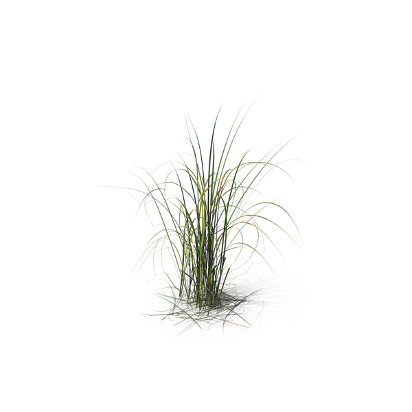 Giant Miscanthus PNG Images & PSDs for Download.