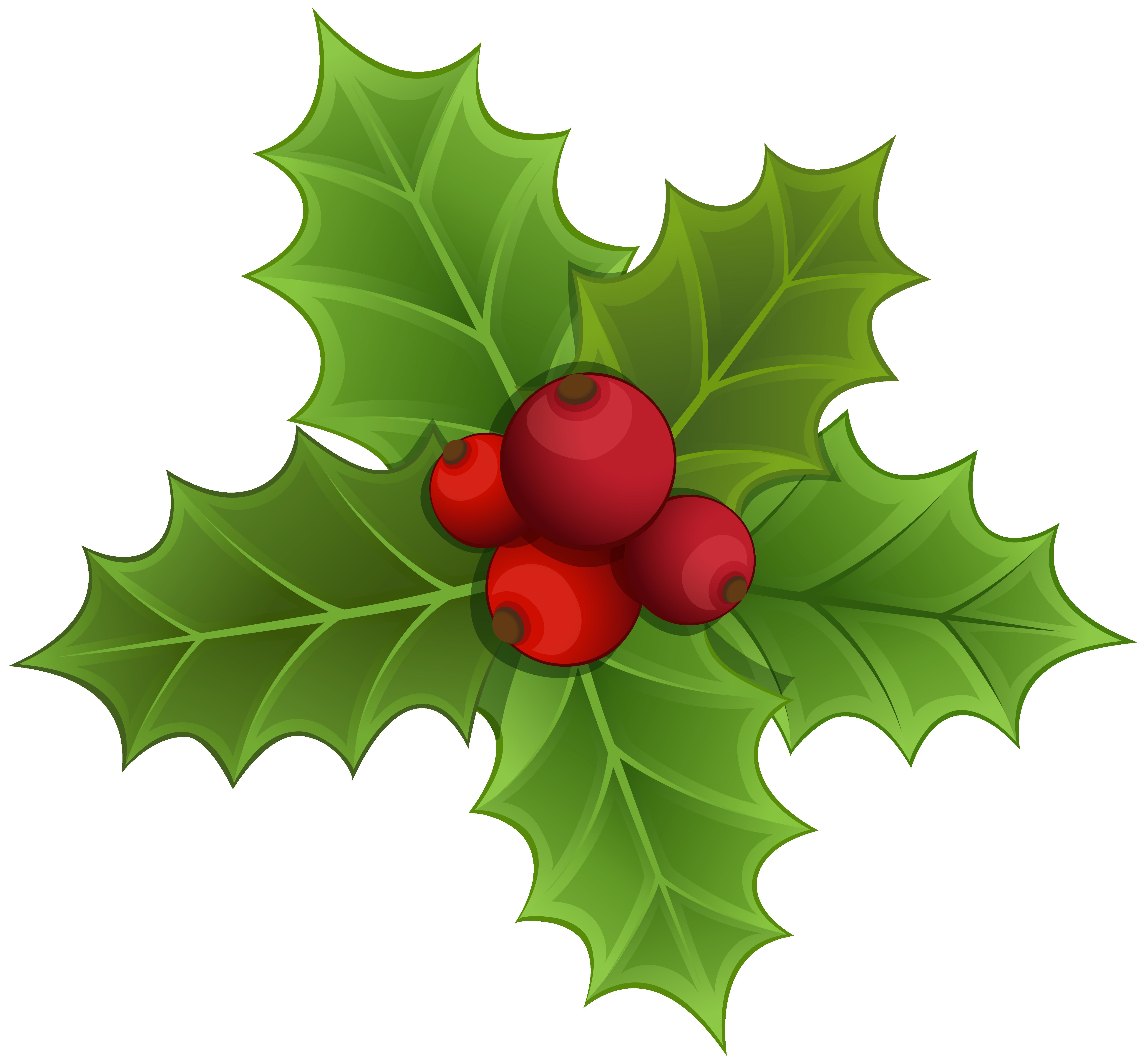 Mistletoe PNG Clipart Image.