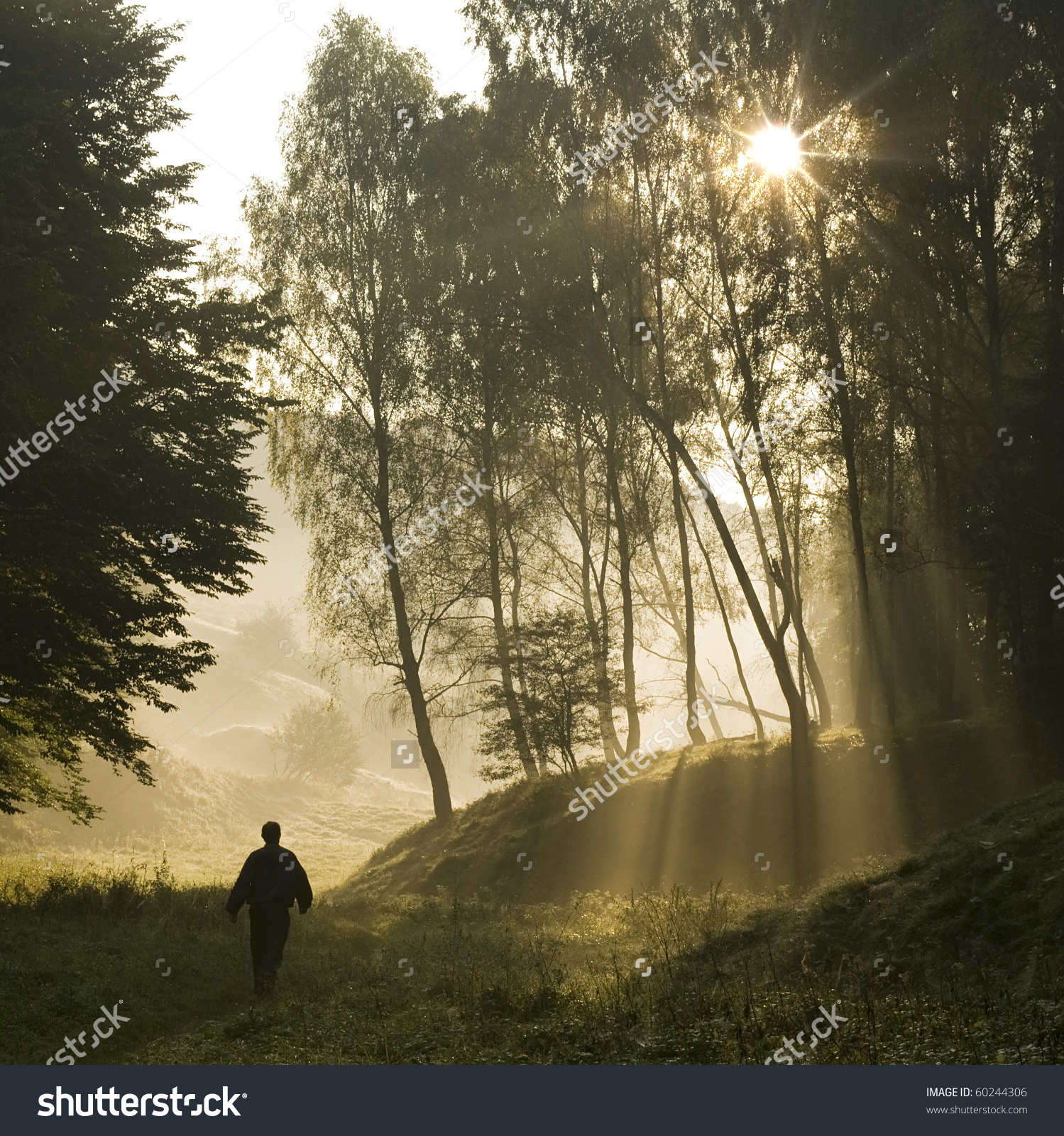 Walk Along Forest Early Misty Morning Stock Photo 60244306.