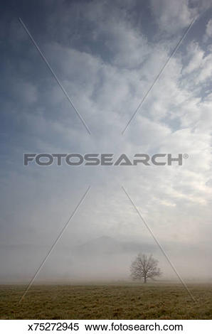 Stock Image of USA, Tennessee, Great Smoky Mountains, misty.