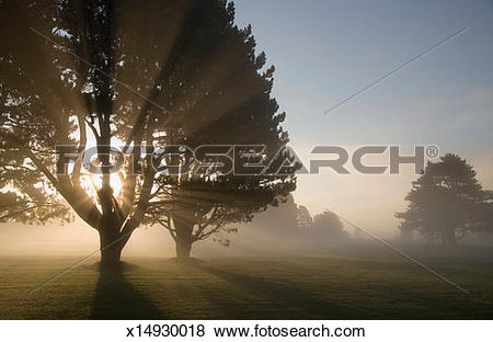 Pictures of Sunrays penetrating trees on misty morning x14930018.