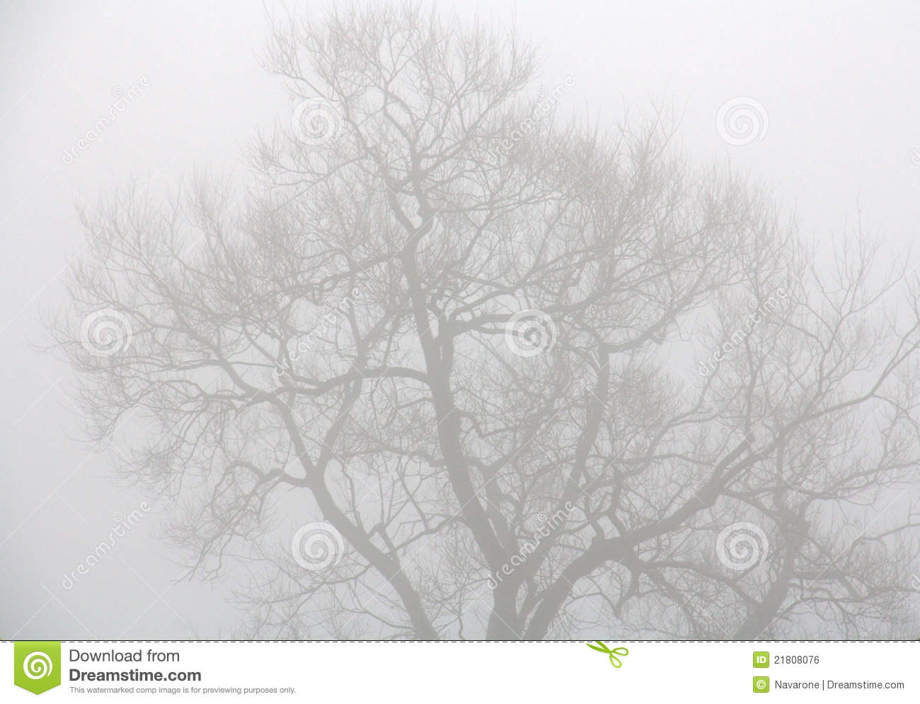 Trees Through Heavy Mist Royalty Free Stock Image.