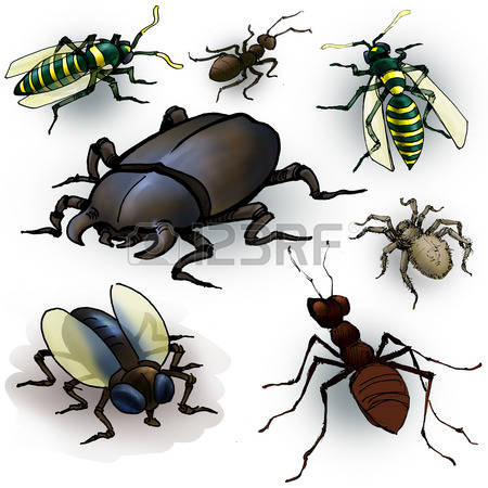 94 Cockchafer Stock Vector Illustration And Royalty Free.
