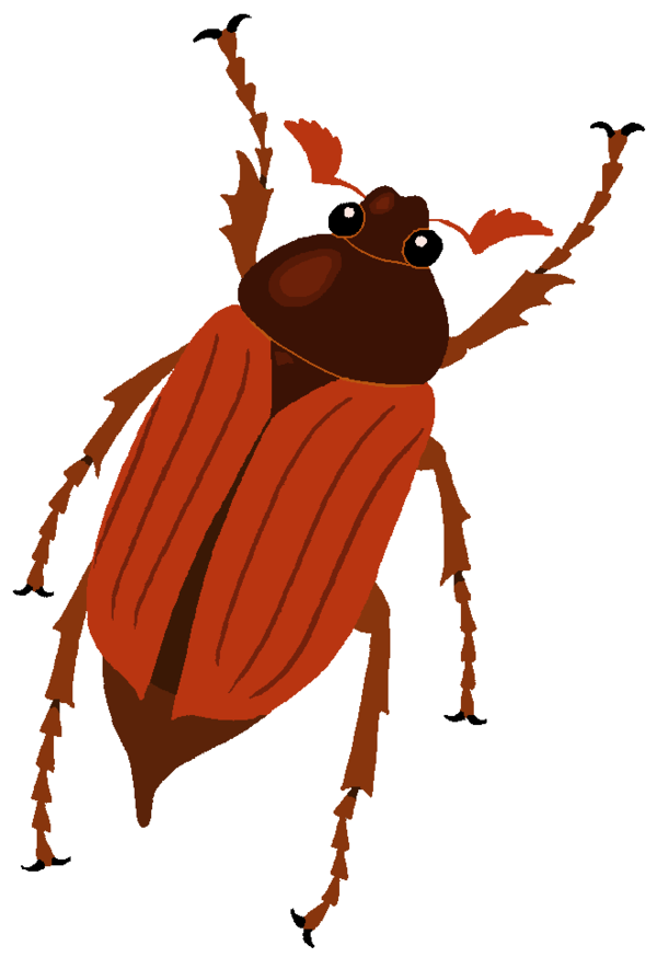 Cockchafer Clipart by MisterBug on DeviantArt.