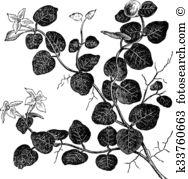 Mitchell Clip Art Illustrations. 16 mitchell clipart EPS vector.