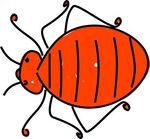 bedbug.