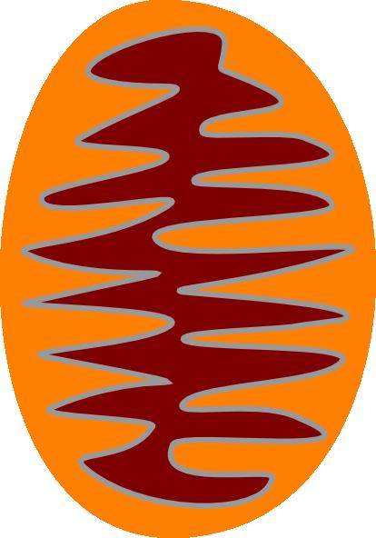 Mitochondria Clipart.