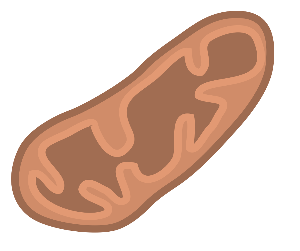 Mitochondria Png (111+ images in Collection) Page 2.