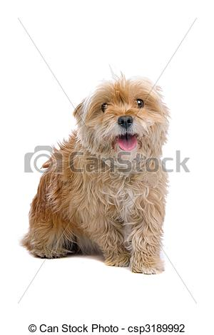 Mixed breed Clipart and Stock Illustrations. 191 Mixed breed.