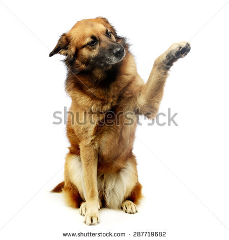 Mixed Breed Dog Stock Photos, Royalty.