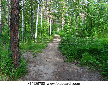 Stock Photography of Path in a mixed forest. Summer landscape.