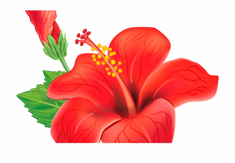 Moana Flower Png.