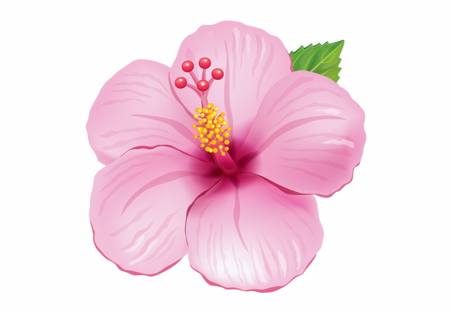 Pink Exotic Flower Png Clipart Picture.