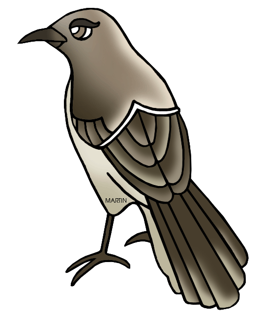 Mockingbird bird clip art at vector clip art free.