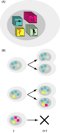 Cartoon of model construction. (A) Cells within the model can.