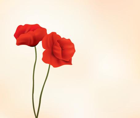 Rote Mohn Blume.