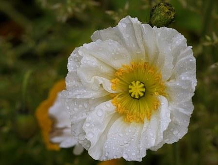 Open, Flower.