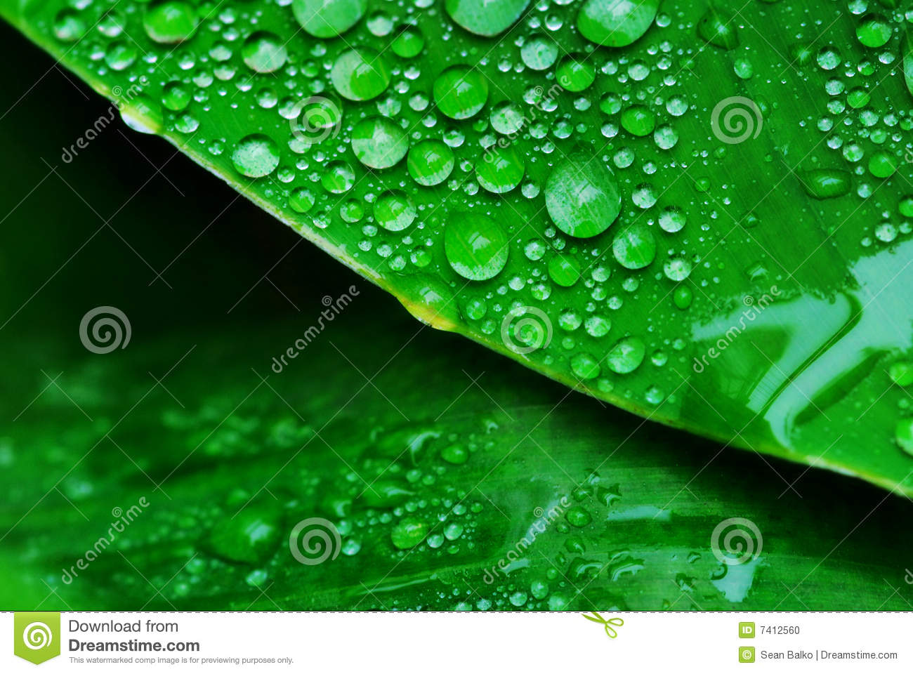 Green Leaf With Water Droplets Stock Photo.