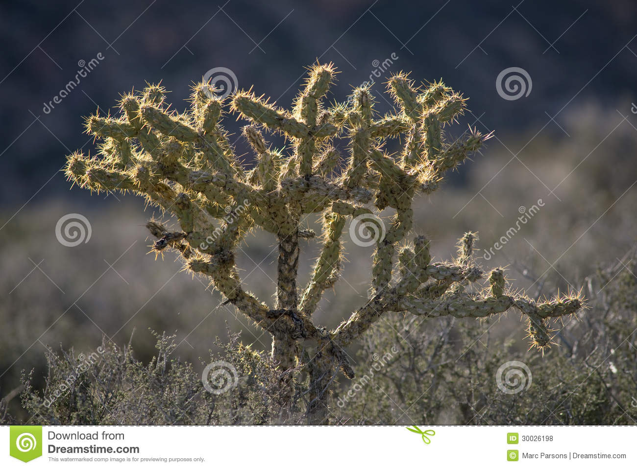 Mojave Desert Cactus Clipart.