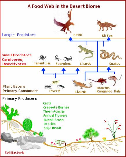 Food Chains/Food Webs.