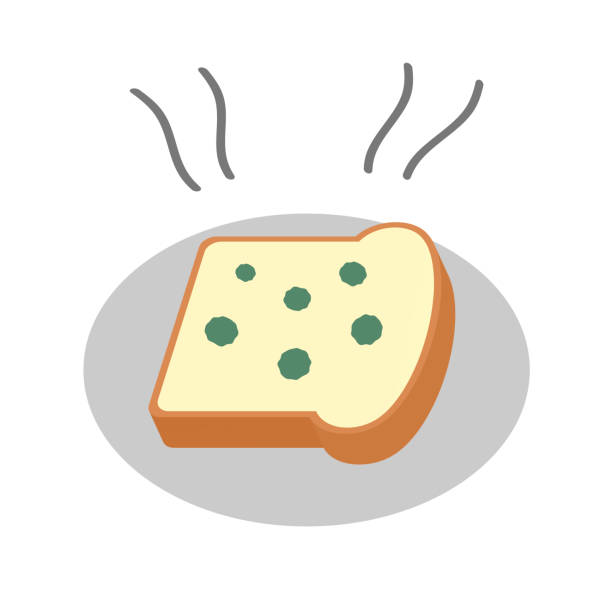 Mold Bread Illustrations, Royalty.