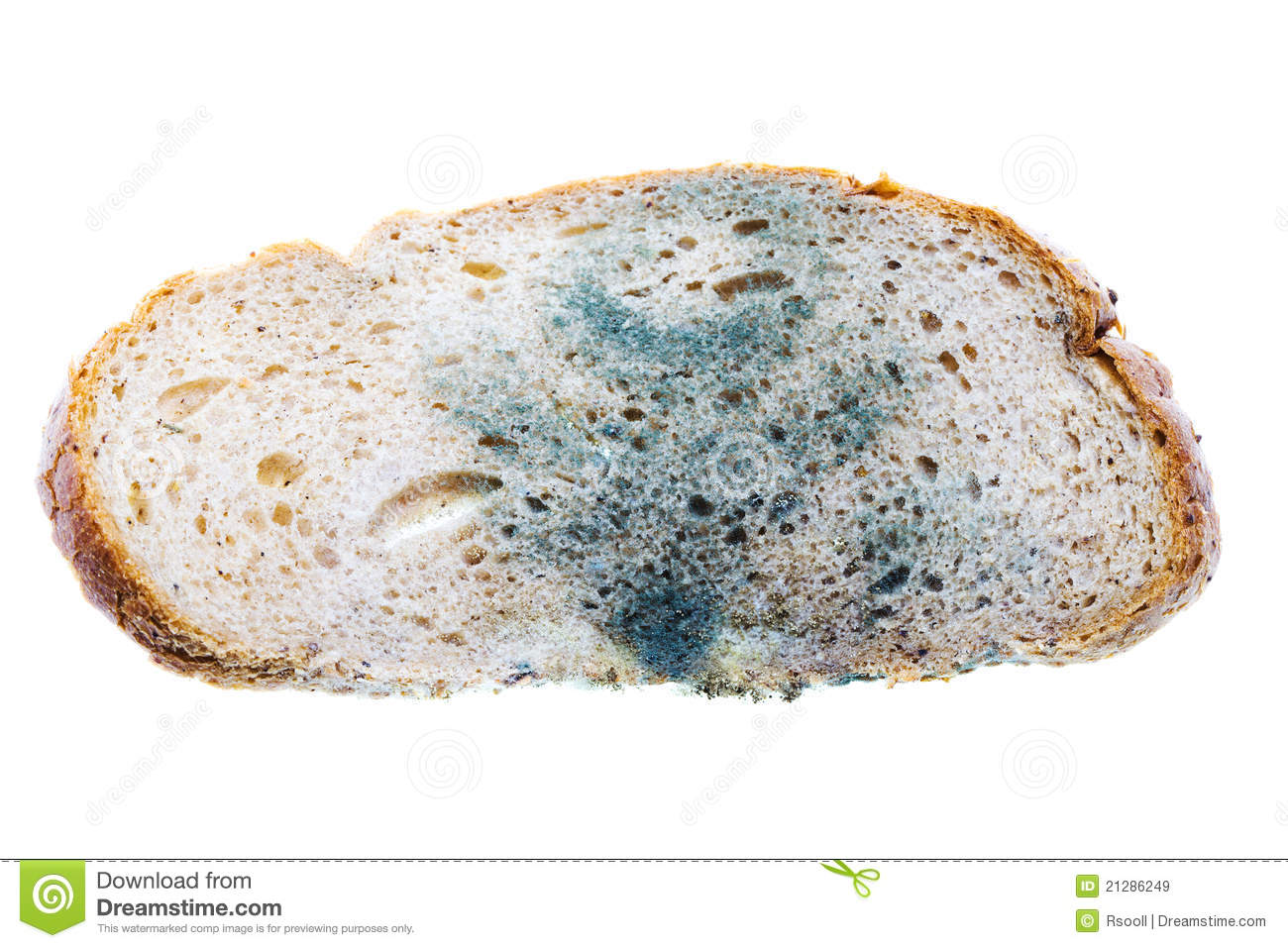 Bread Mold Stock Photos, Images, & Pictures.
