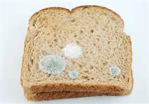 Similiar White Moldy Wheat Bread Keywords.