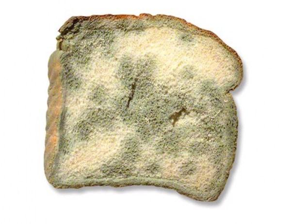 Moldy Food Clipart.
