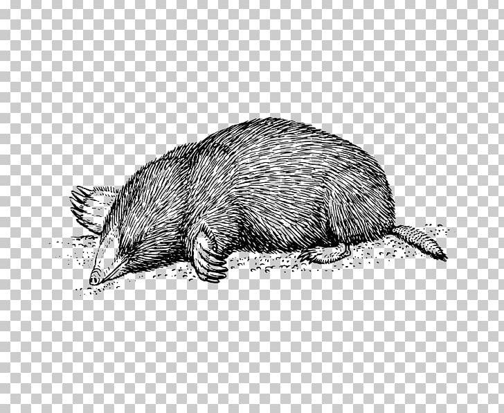 Moles T.