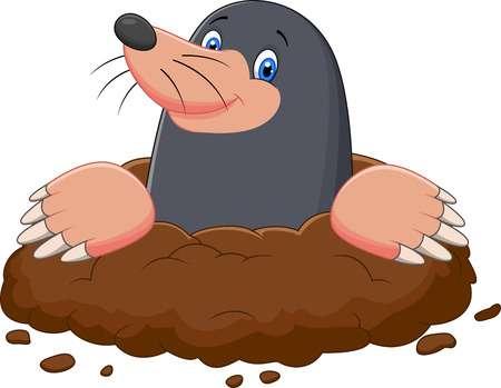 1,881 Mole Cliparts, Stock Vector And Royalty Free Mole.
