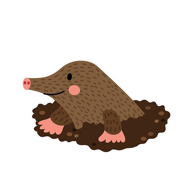 Best Mole Illustrations, Royalty.