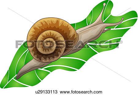 Clipart of mollusc, mollusk, mollusks, leaf, snail, mollucca.