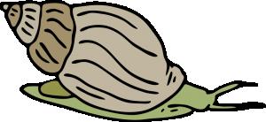 Mollusca clipart #7