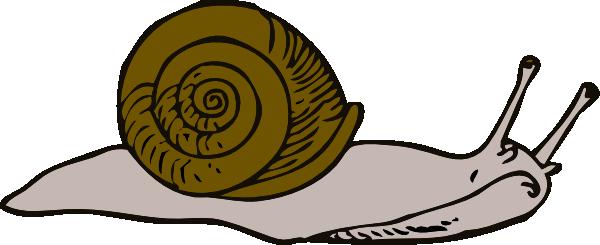 Snail 11 Clip Art at Clker.com.