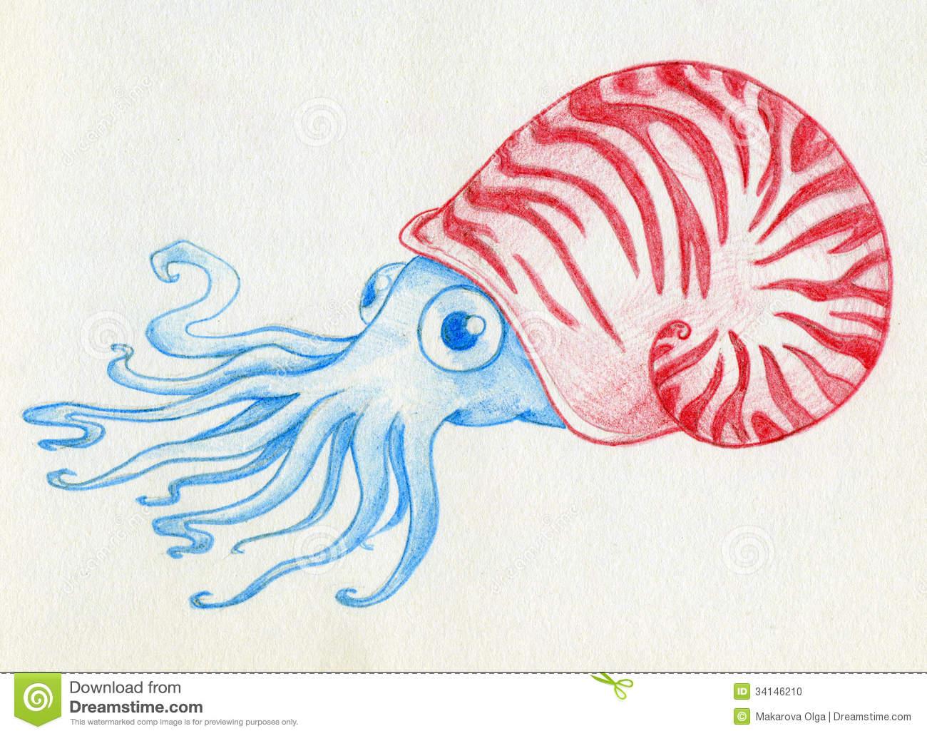 Mollusca Stock Illustrations.