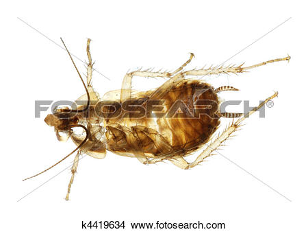 Stock Photo of Cockroach insect molt k4419634.