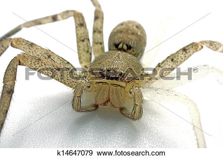 Stock Photograph of Spiders are molting. k14647079.