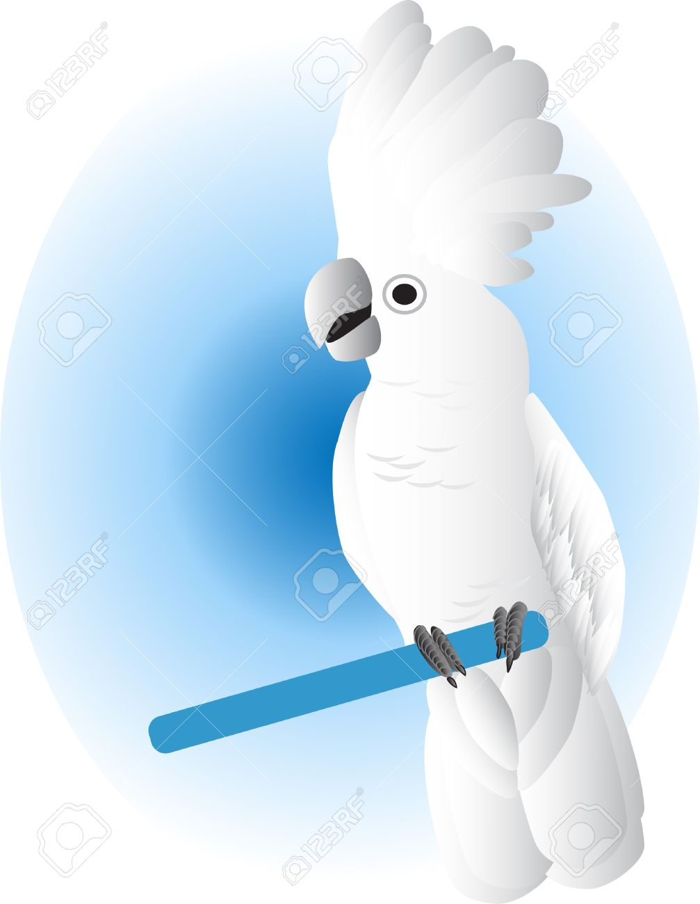 White Cockatoo Royalty Free Cliparts, Vectors, And Stock.