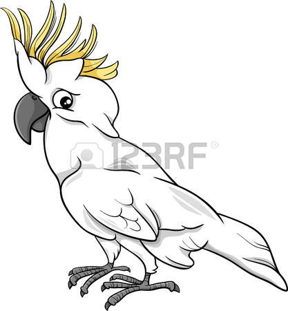 793 Cockatoo Stock Illustrations, Cliparts And Royalty Free.