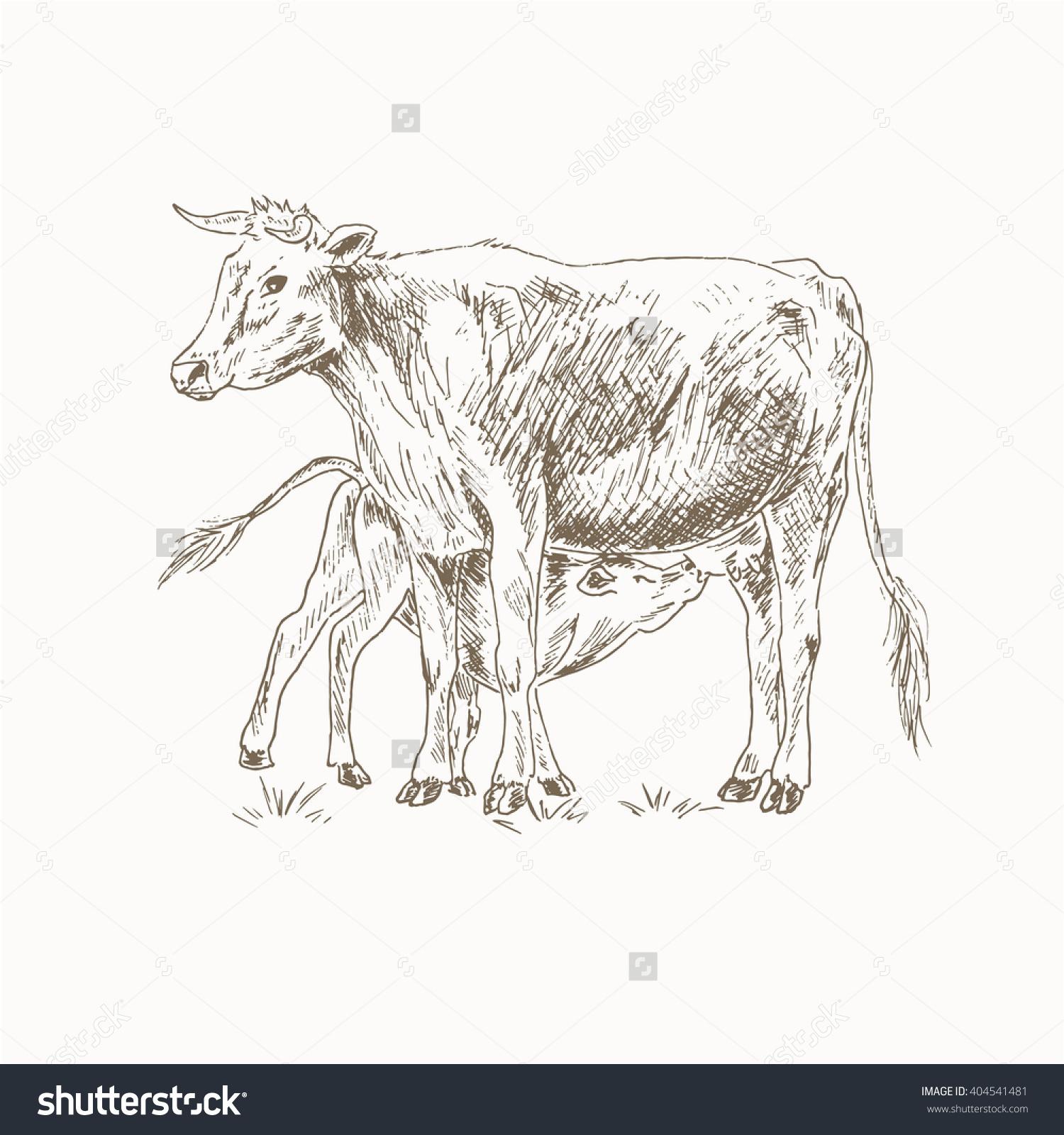 Cow Feeding Calf Sketch Mom Baby Stock Vector 404541481.