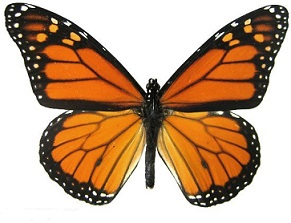 Free Monarch Butterfly Clipart.