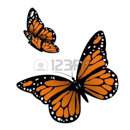 3,451 Monarch Butterfly Stock Vector Illustration And Royalty Free.